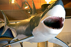 shark-week-exhibit-hall