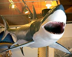 shark-week-exhibit-hall